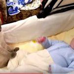 暴れる赤ちゃんを優しく抑えるネコさん