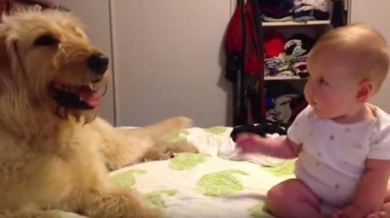 大きなワンちゃんを触りたいけどモジモジしている赤ちゃん、ワンちゃんが行動を起こす♡