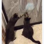 お風呂掃除の裏側で遊ぶネコちゃん達