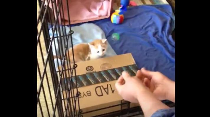 子猫の前に両手を差し出したら・・・可愛いすぎて悶絶