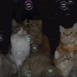 「わあぁぁぁ♪」9匹のネコちゃん、初めてのしゃぼん玉に目を輝かせて眺める