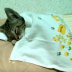 お布団で寝る子猫ちゃん、今日も一日おつかれさま♪