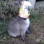 缶詰をかぶった動物・・・とってあげるとカワイイ子がいた♪