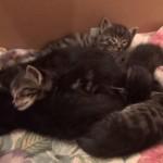 何匹いるでしょうか?合体して寝る子猫ちゃん達
