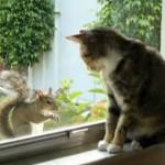 少しづつ仲良くなるネコさんとリスさんにほのぼの♪