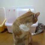 どうしても先輩ネコの尻尾を触りたいネコが閃いた必殺技がカワイイ♪