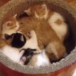 寒い季節に猫なべはいかがでしょうか?