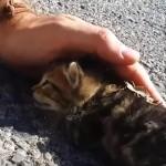 道の真ん中で瀕死の状況で倒れていた子猫、手のぬくもりで生きる力を取り戻す