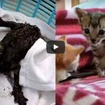 レストランの排気ダクトの中から油まみれで救出される子猫達