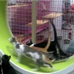 猫専用フィットネスホイール「One Fast Cat」がついに実用化♪