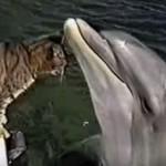 ネコとイルカが初対面したら、とっても仲良くなった♪