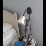 電気をつける子ネコちゃん、やっとついたニャ・・・!?
