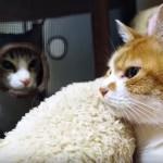 覗くネコと覗かれるネコ