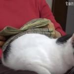 洗濯物をたたんでると洗濯台になる猫