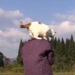 おばぁちゃんの肩にのって散歩をするネコちゃん