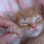 子猫のお仕事は遊んで寝る事♪