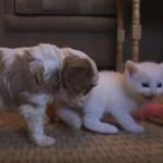 よちよちの子猫 vs よちよちの子犬