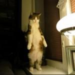 夜になるとこっそり立つネコちゃん
