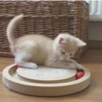 庭で発見された子猫ちゃん、すぐに環境に順応して遊びだす♪