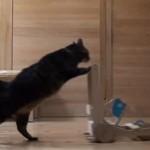 [動画] 二足歩行で乳母車を押しながら普通に歩くネコ