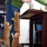 ご飯の準備をしてたら、子ネコちゃんの人間登りがはじまる♡