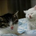 2匹の子猫がうたた寝、最後はよりそってzzz