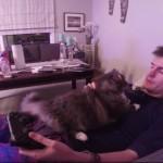 TVゲームしていると、何故ネコは邪魔をしにくるのでしょうか?