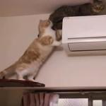 エアコンから降りられなくなったネコ、レスキューキャットが救出に向かうも・・・