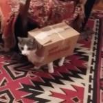 ダンボールの鎧を装備した猫ちゃん
