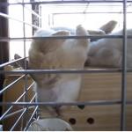 野性はどこに??凄い寝方をするウサギ