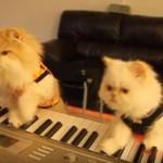 並んでピアノを弾く芸達者なネコちゃん達