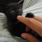 母親がやってきても一匹だけ飼い主の膝の上から離れない黒猫さん♪