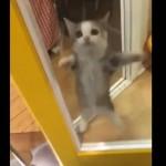 ジャンプして飼い主さんの帰宅をお出迎えする子猫が可愛すぎて悶絶♪