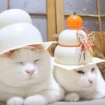 鏡餅の帽子が似合いすぎる猫たち