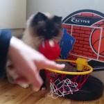 「先生、バスケがしたいです...」なネコさん