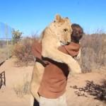 [感動] ライオンと人間、久々の再開で熱い抱擁