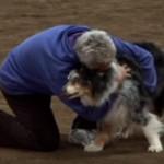 10年間飼い主と一緒に挑戦したアジリティ(障害物競走)のラストランを迎える老犬に感動