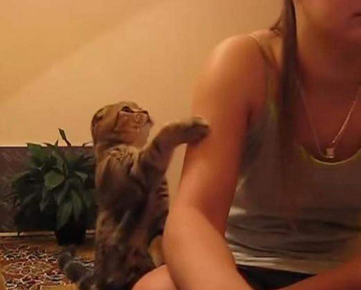 お姉さんにかまって欲しくてトントンし続ける猫