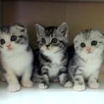 Perfume のように同時に踊る3匹の子猫♪