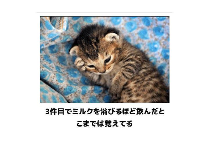 猫の画像でボケて!? 傑作選その3