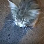 ふらふらな状態で、仲良しだった犬に最後のお別れを言いにきたネコ