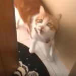 家にかえってきて玄関をあけると、「おかえり♪まってたニャン~」と大歓迎するネコさん