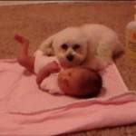 掃除機の音がすると、赤ちゃんを守ろうとするワンちゃん