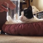 猫さんに、化学の不思議をみせてみると・・・!?