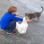 ネコちゃんに少年がハグをしようとすると・・・?