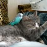 「起きて遊ぼう~♪」 ネコちゃんを起こすインコさん
