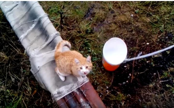 二階を見上げるネコちゃんの隣に空のバケツをおろしてみたら、予想通りの展開になった♪