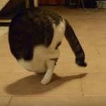 何故か前転が大好きな猫ちゃん(^◇^)