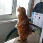 猫背はどこに?お外をのぞこうとして立ち上がる猫