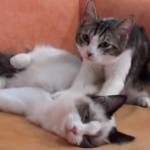 ネコによるハンドマッサージで気持ちよさそうなネコ
